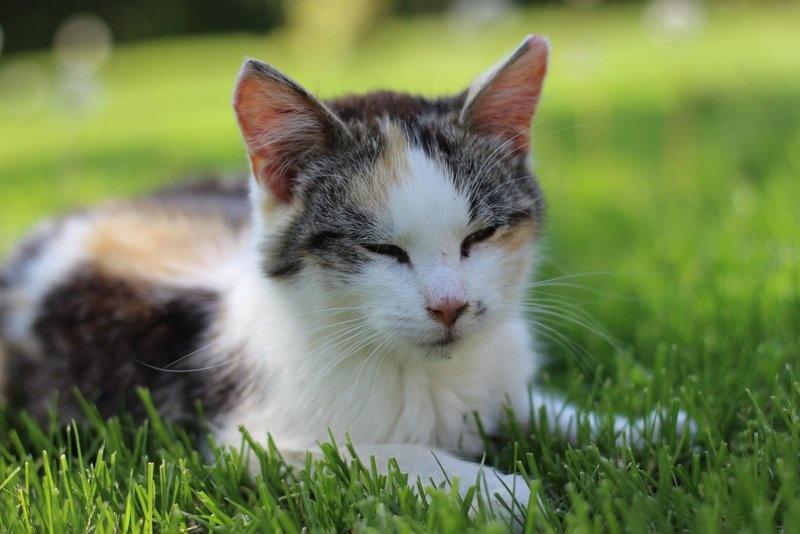 Frühkastration der Katze 2