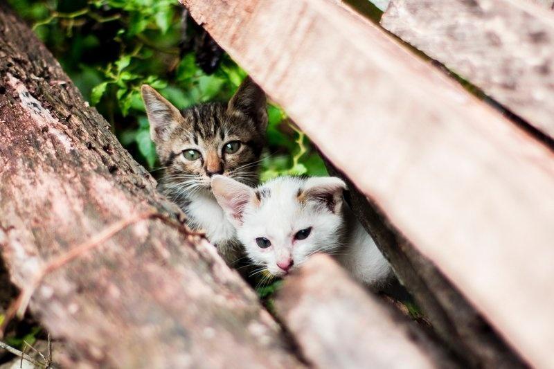 Frühkastration der Katze 5