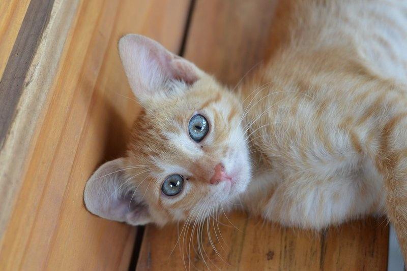 Frühkastration der Katze 4