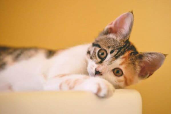 Frühkastration der Katze 1